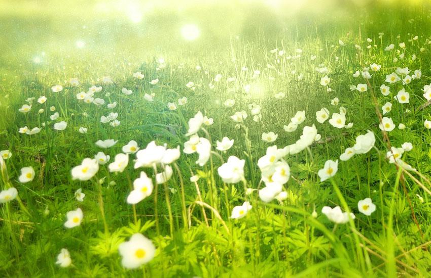 人が気づくと新しい花が生まれる