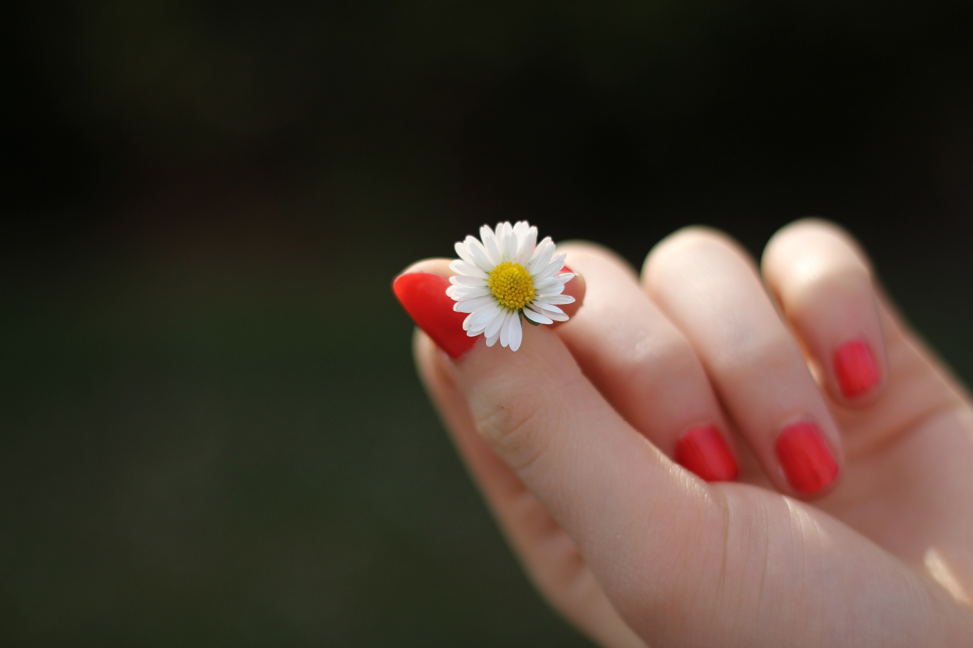 小さな花を持つ手