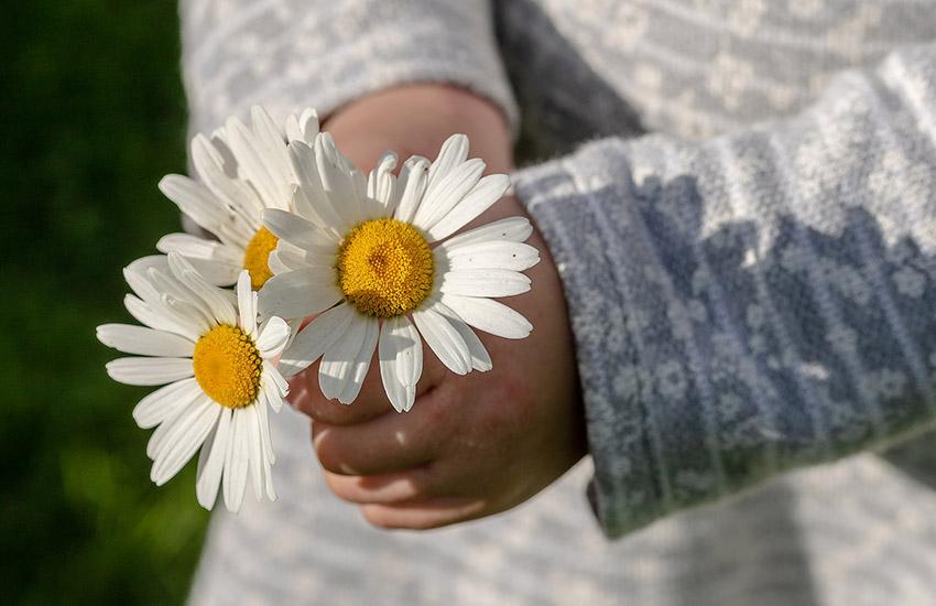 ありがとうの花