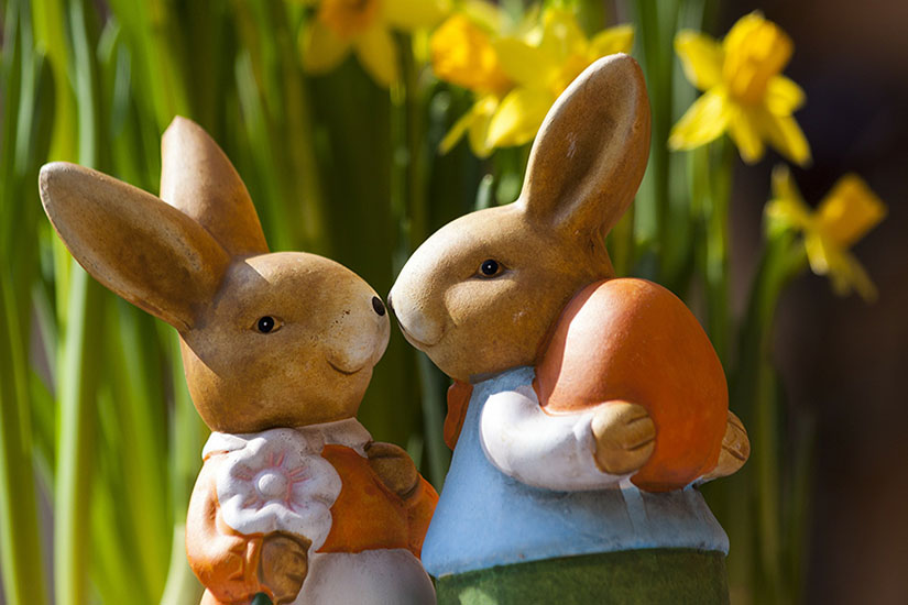 ウサギの恋人同士