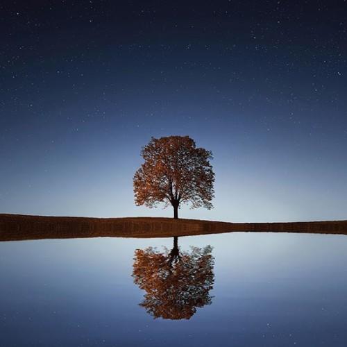 天空と大地の狭間で星を想う樹
