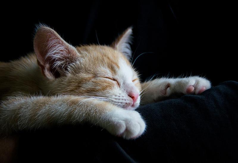 心と体を休める猫