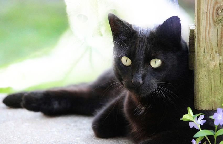 猫のオーラ