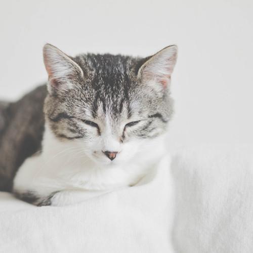 夢の中の猫